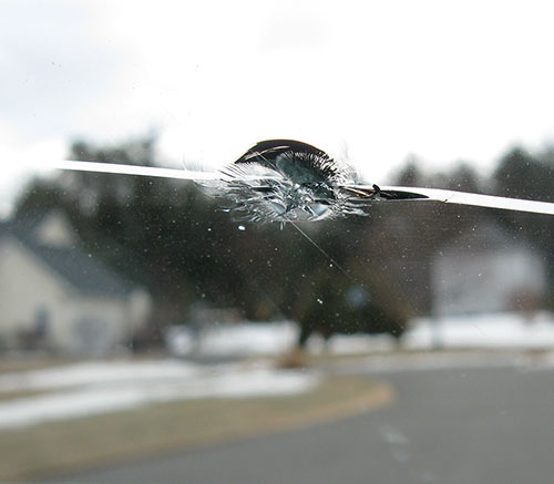 What's in a Name? Types of Windshield Damage, Explained